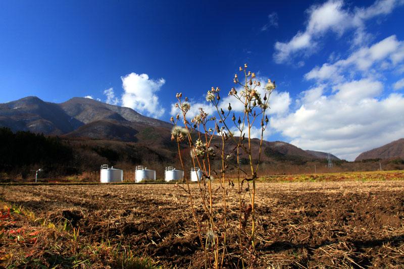 雪を待つ 刈り取り田畑 残り物 at Urabandai Fukushima