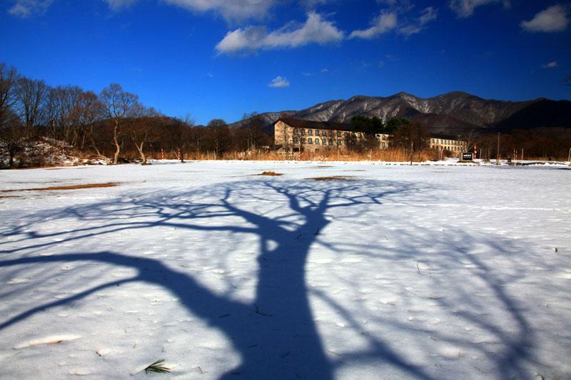 この木何の木気になる木  at Urabandai Fukushima