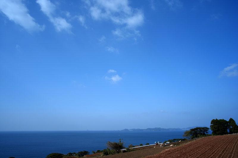 青い空 段々畑に さつま芋