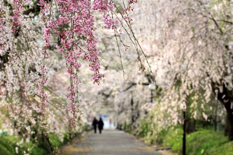 並木道 花も寄り添う これからも  at tokusa yamaguchi