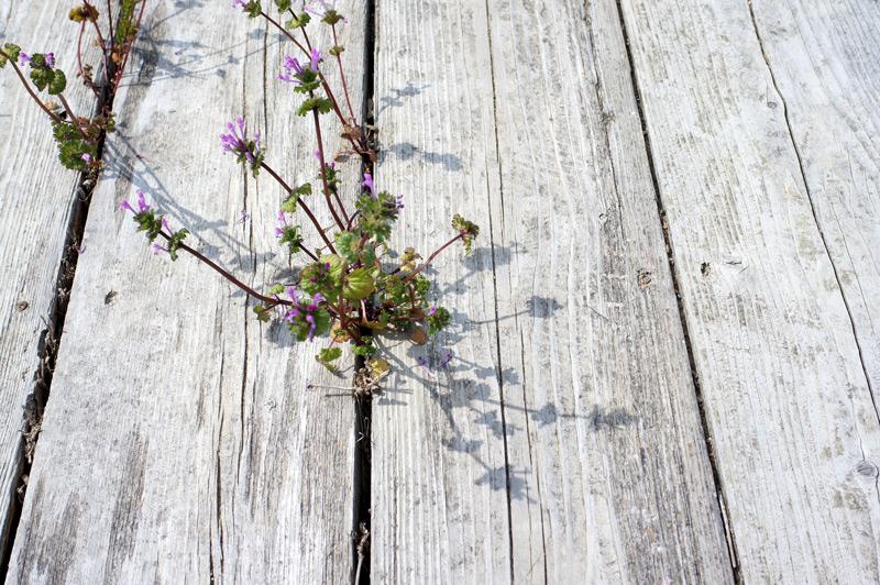 春光に むらさきの花 影落とす at Fukagawaseiji Arita