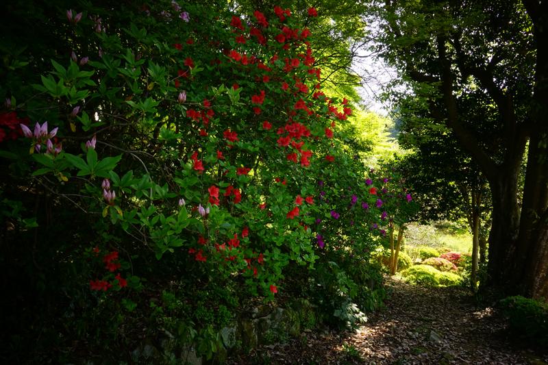 最後まで 花が盛りと 日陰者 at Mifuneyama saga