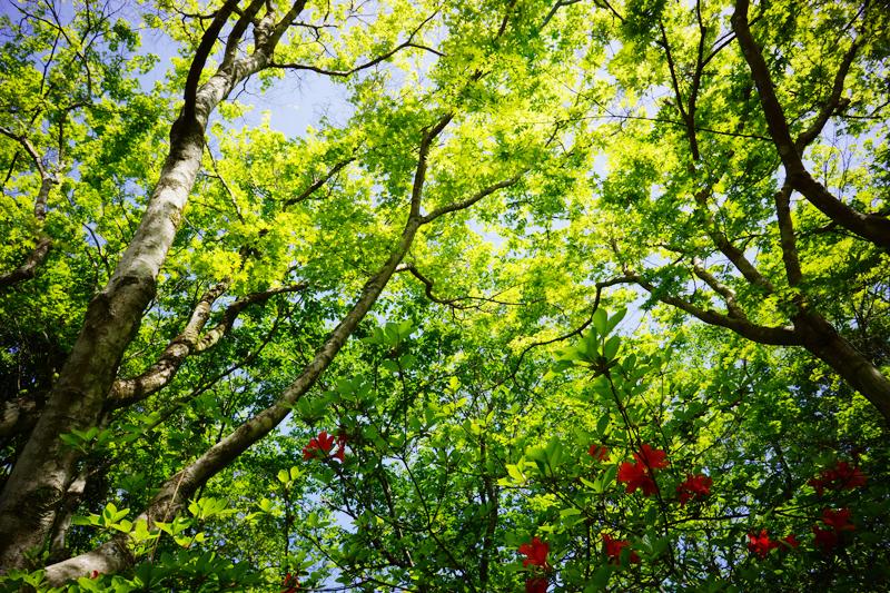 花よりも 光り輝く 新緑よ at Mifuneyama Saga
