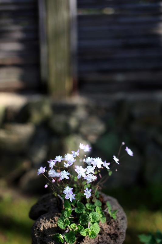 寄り添えば より華やかに 小さき花 at Hakozaki-gu Fukuoka