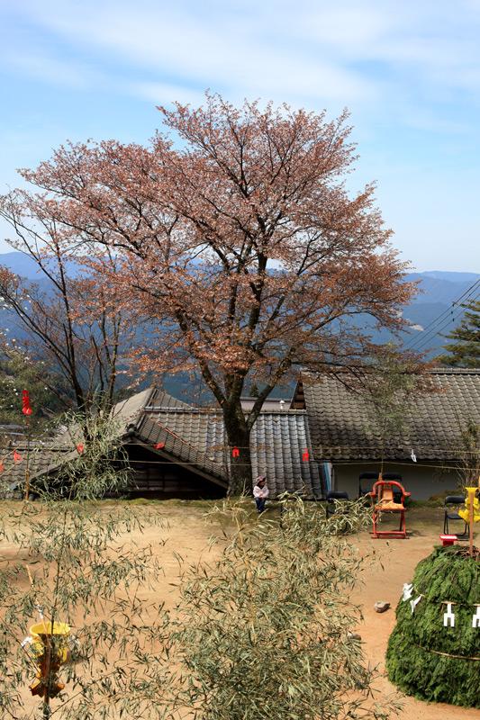 護摩焚きに 桜散るほど 一人待つ at Hikosan( 英彦山神宮)Fukuoka