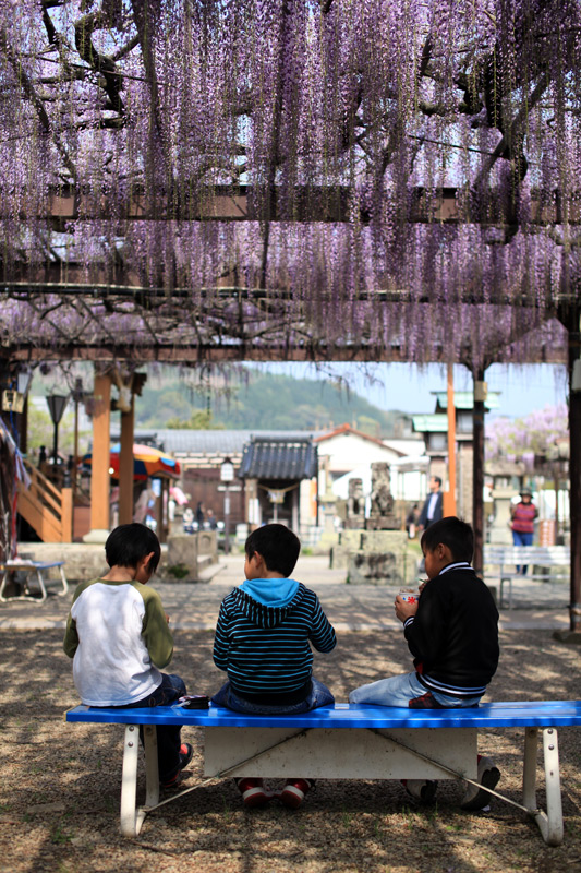 子供らは 藤の花より かき氷 at Kurogi Fukuoka