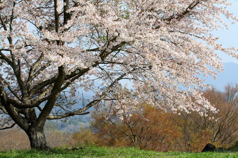 岡城跡 春高楼の 花の宴 at Takete Oita