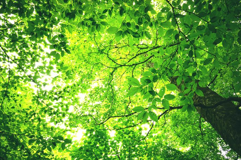 濃い緑 黄緑変わる 幾重にも at Yufu Oita