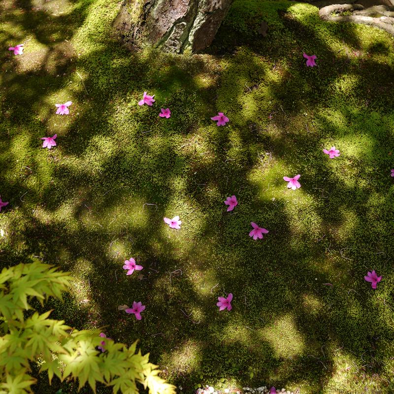 庭先に 落ちた配置も 世界的 at Yasugi Shimane(足立美術館)