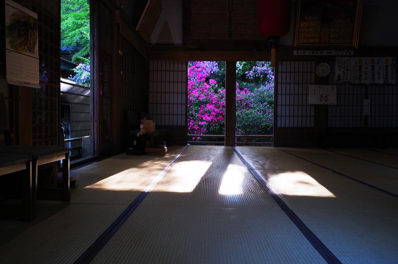 仏前に 赤と緑も 光射す at Tosu Saga(大興善寺)