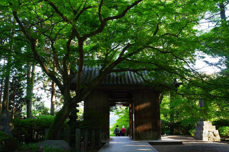 満開に 余韻楽しみ 下山する at Tosu Saga(大興善寺)