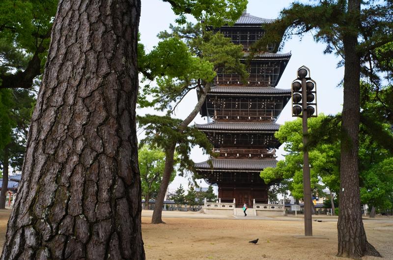 善通寺 鳩も参拝 御見逸れし at Zentuji Kagawa