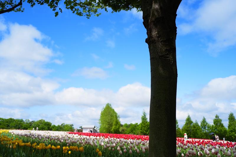 丘に咲く 日陰が恋しい 立夏の空 at Sera Hiroshima