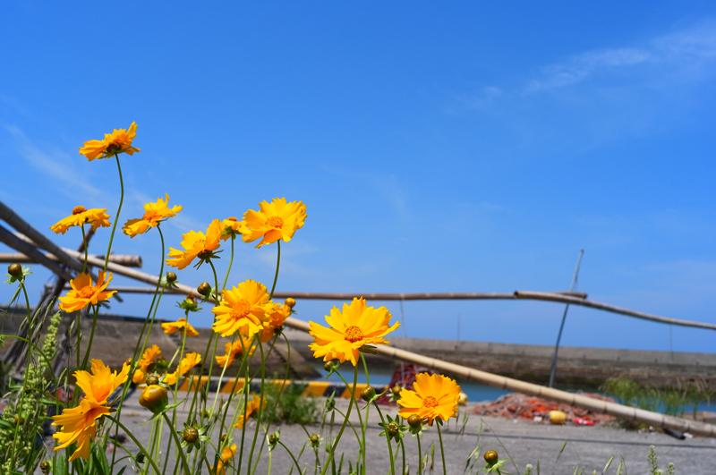 寂れたる 昔の勢い 花に通ず  at Akune Kagoshima