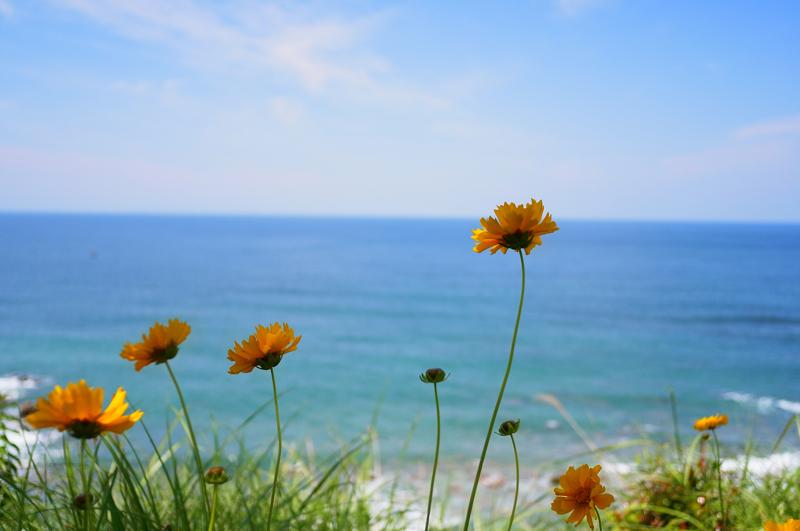 背景に 今は盛りと 空と海  at Akune Kagoshima