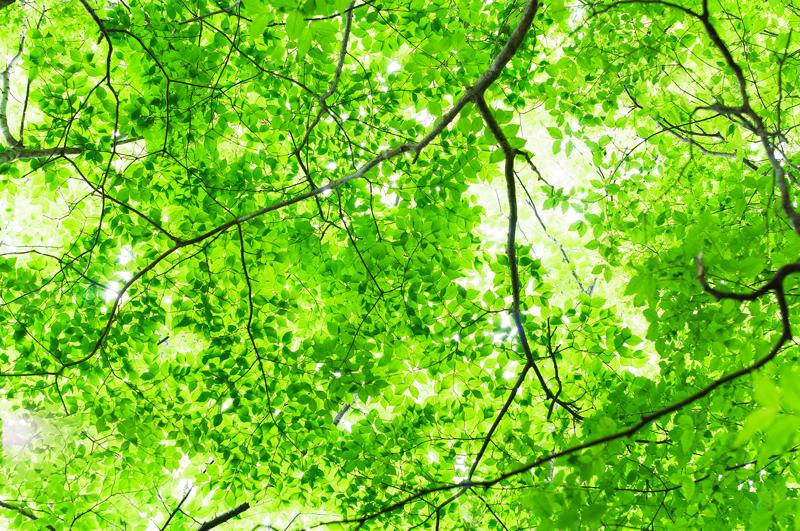 今盛り 春と秋では 違い過ぎ at Yufu Oita
