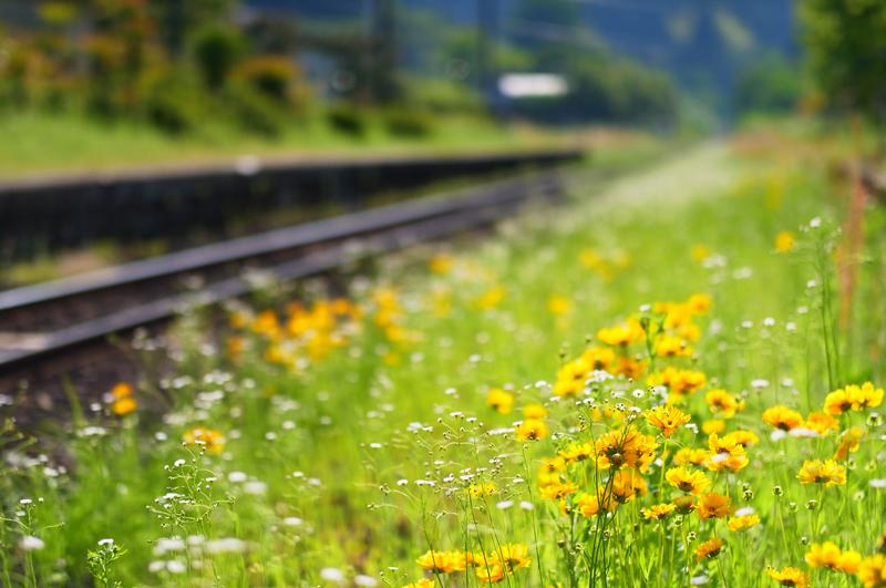線路沿い 世代交代 繰り返し  at Kirishima Kagoshima(嘉例川駅)