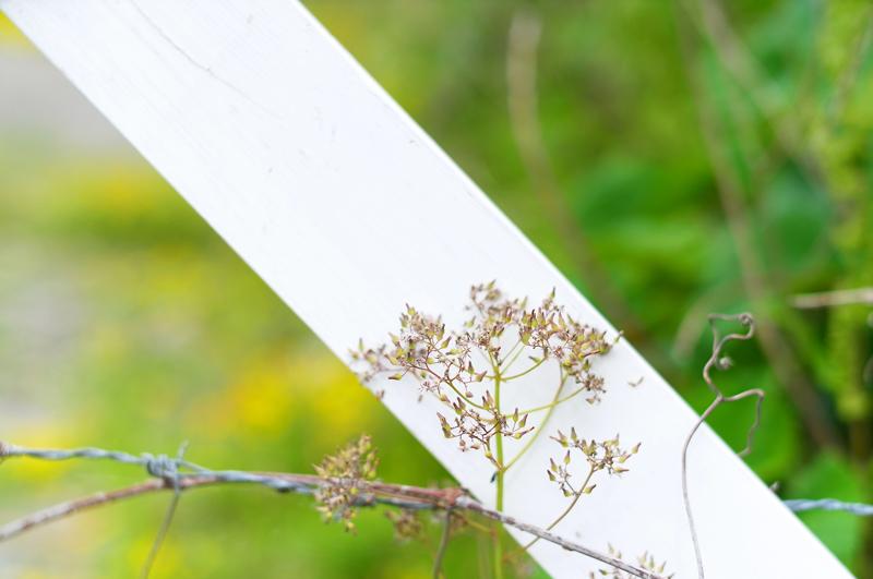 野の花は 白きカンバス 見つけたり at Okagaki Fukuoka