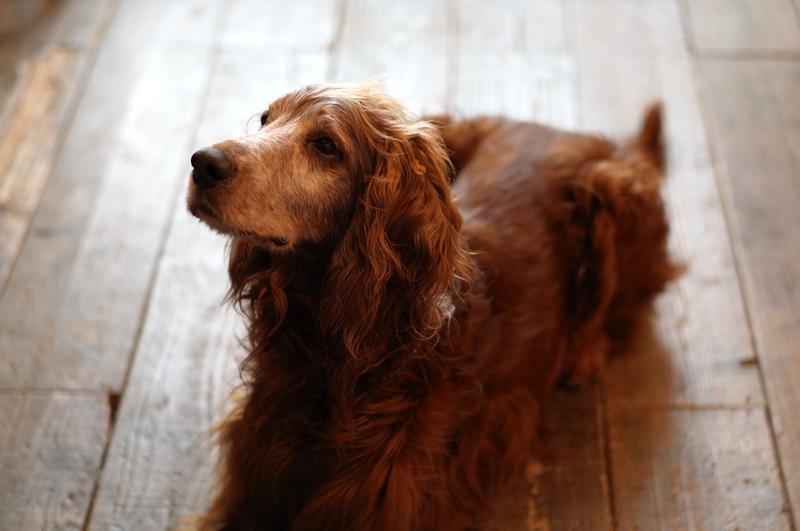 比べたり とてもオリコウ よその犬  at Isahaya Nagasaki(TEXAS LONGHORN)