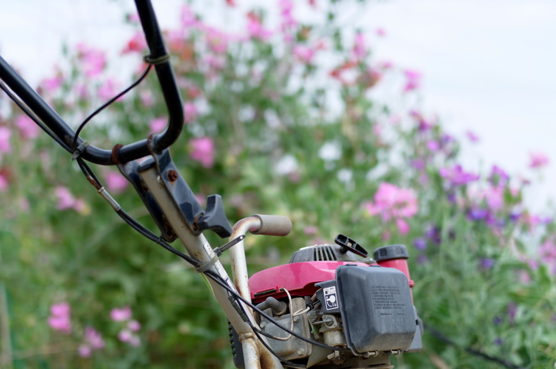 耕運機 花と同じく ピンク色  at Isahaya Nagasaki