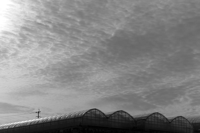 うろこ雲 ハウスと同じ 模様して  at Isahaya Nagasaki