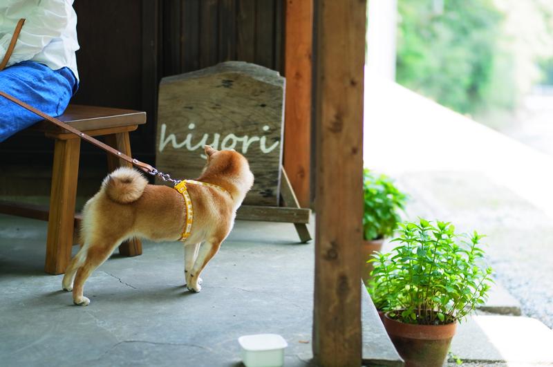 犬びより 散歩楽しむ 坂の上  at YahataNishi-ku Kitakyusyu