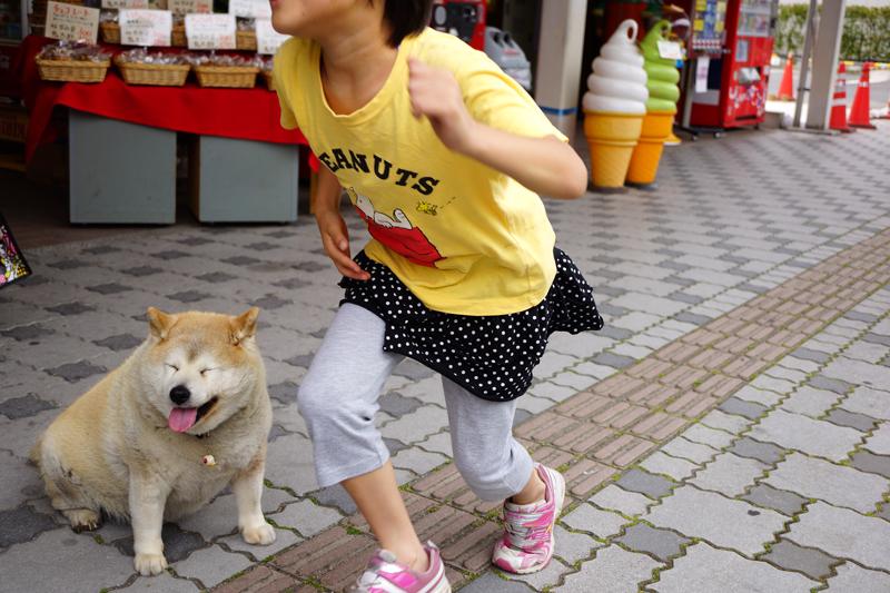 ここの犬 目玉おやじを ぶら下げて  at Sakaiminato Tottori