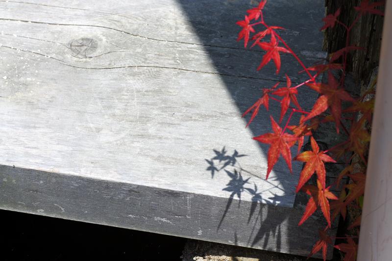 影落とし 赤く色づく もみじかな  at Ota Shimane(石見銀山)