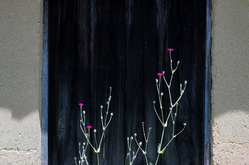 しっくりと 黒の背景 わたし色  at Ota Shimane(石見銀山)