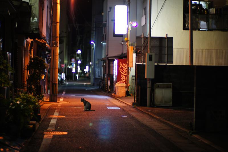 at Hakata-Ku Fukuoka