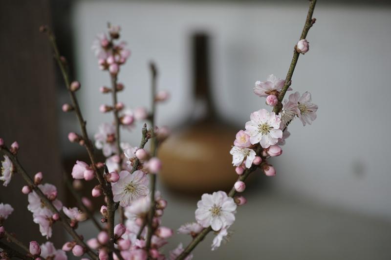 at Toho Fukuoka(太田窯)