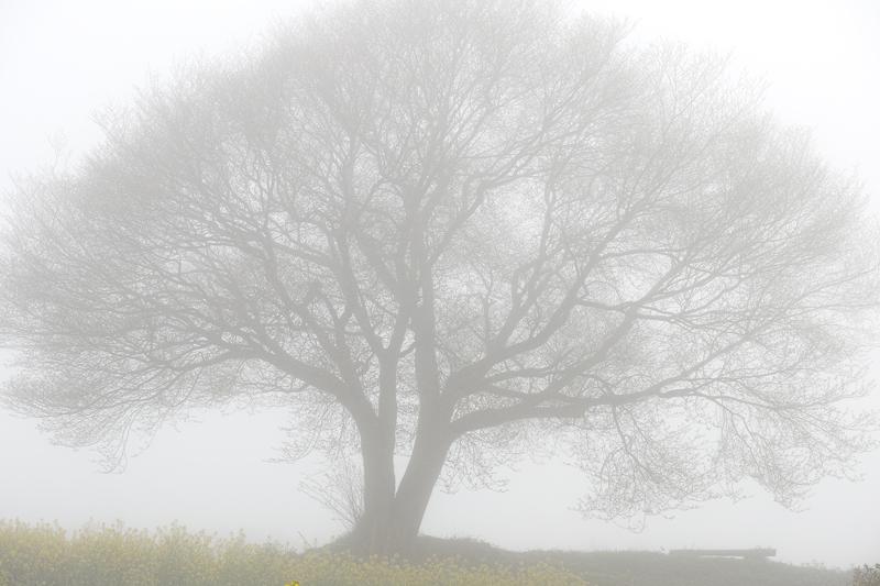 立ち込める 雲の中より 山桜  at Takeo Saga(馬場山桜)