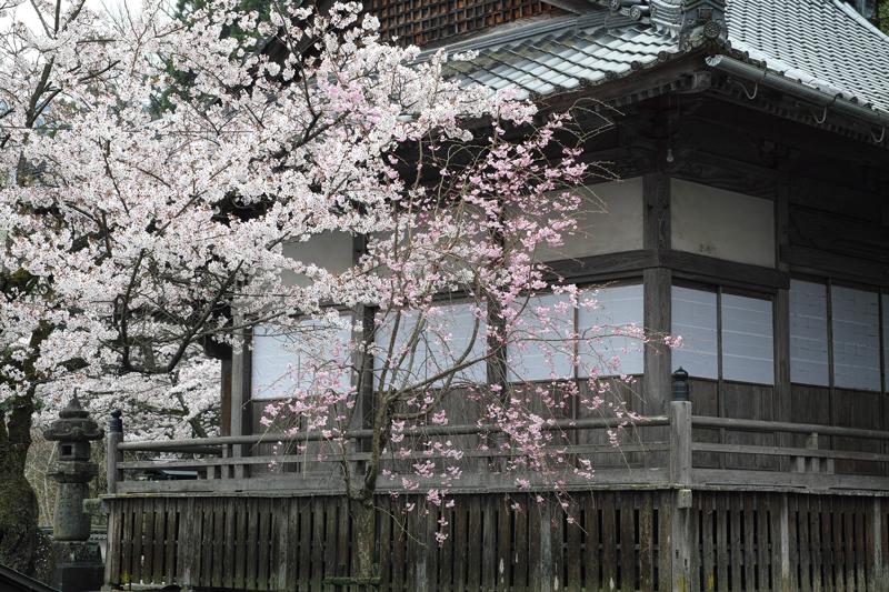at Ukiha Fukuoka