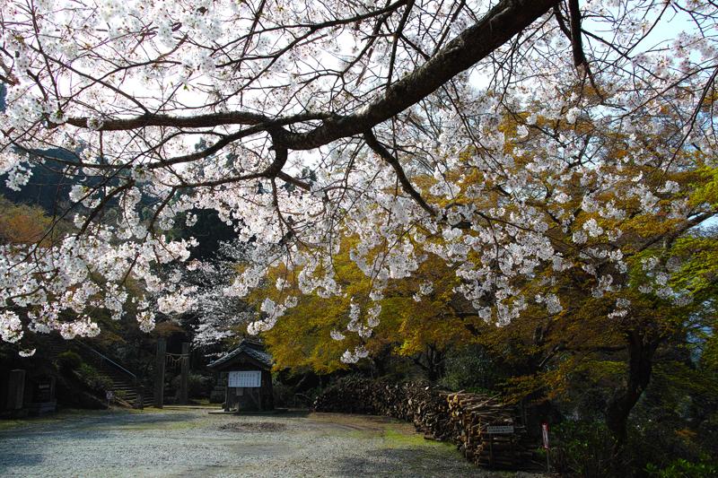 at Kusano Fukuoka