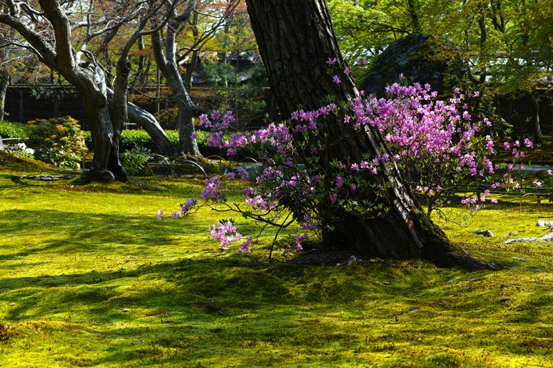 at Kyoto(嵐山;宝厳院)
