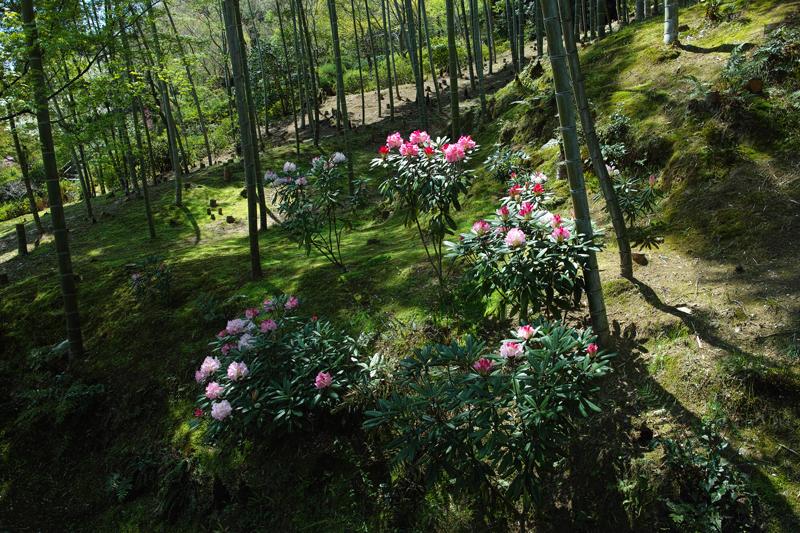at Kyoto(嵐山;天龍寺)