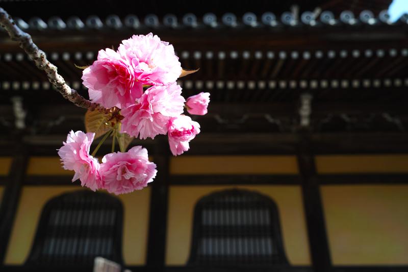 at Kyoto(南禅寺)