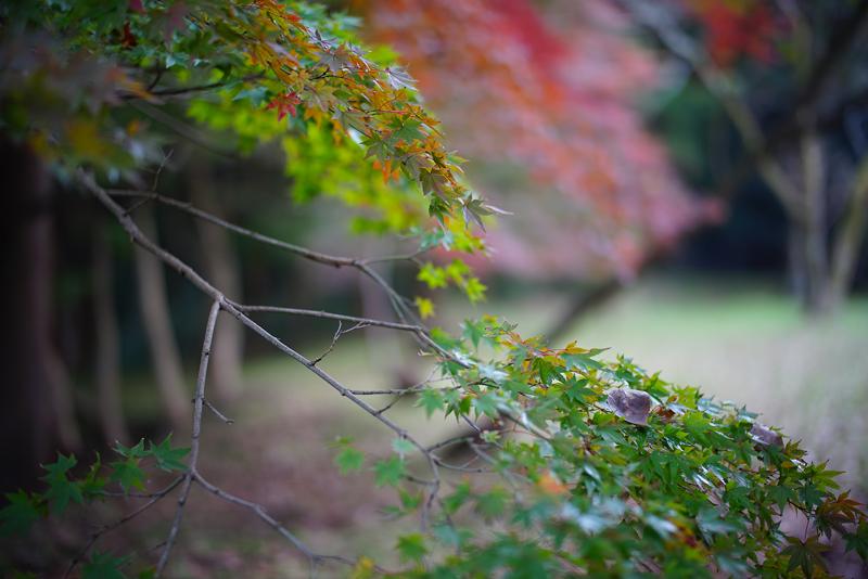 at Akizuki Fukuoka