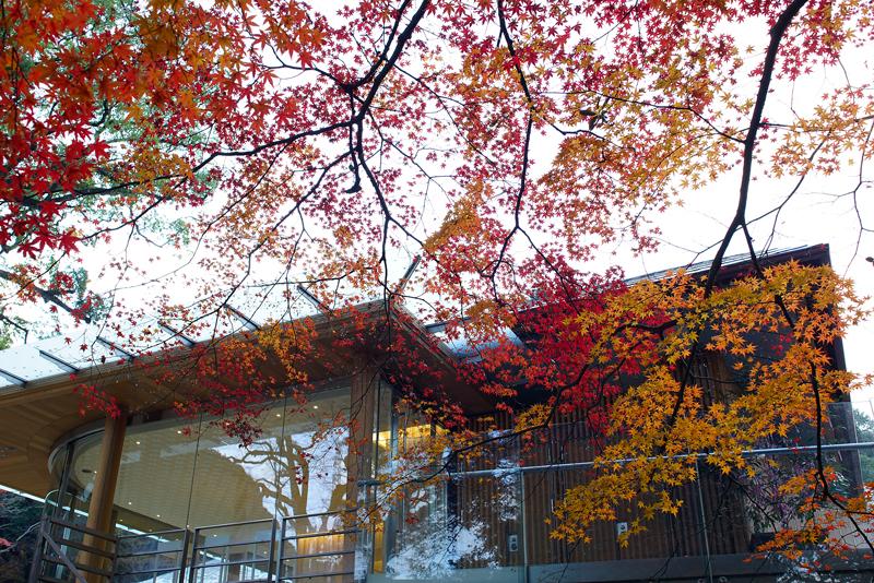 at Dazaifu Fukuoka(竈門神社)