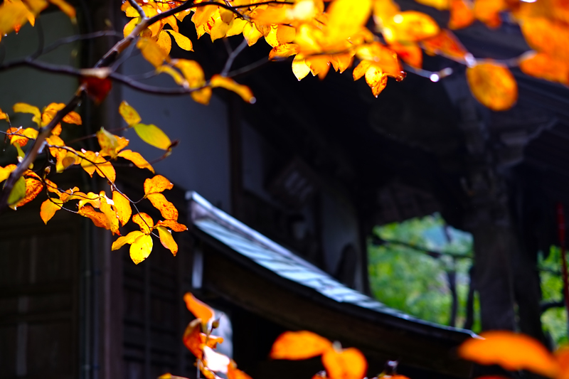 at Tosu Saga(大興善寺)