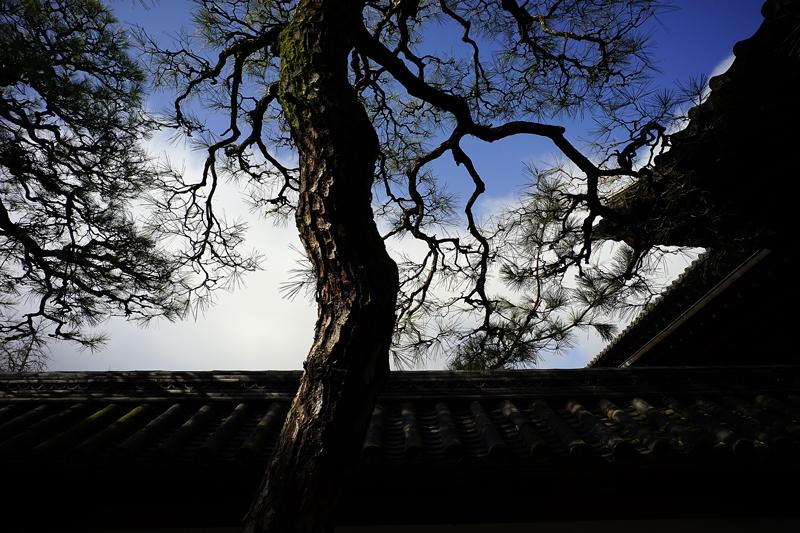 at Kurume Fukuoka(梅林寺)