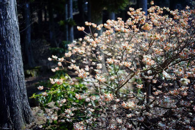 at Soeda Fukuoka