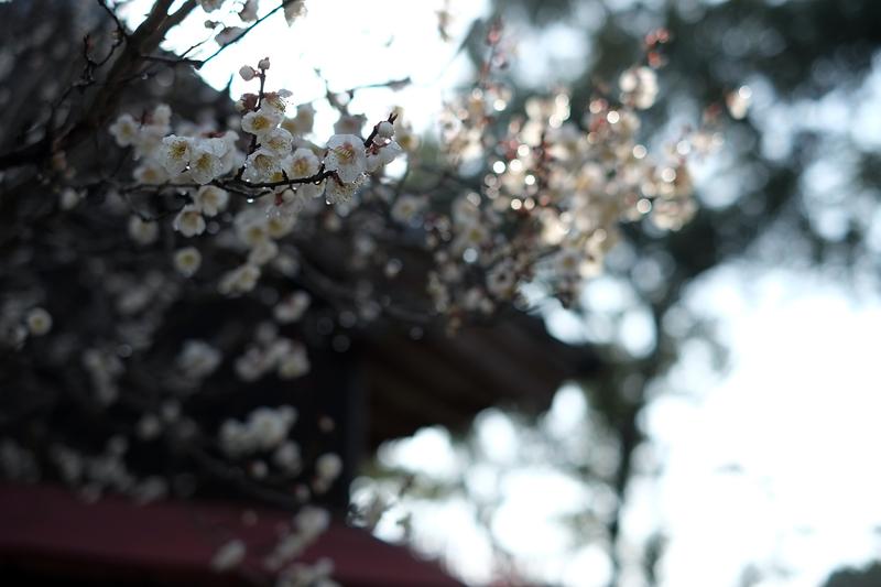 at Chikujyo Fukuoka(綱敷天満宮)