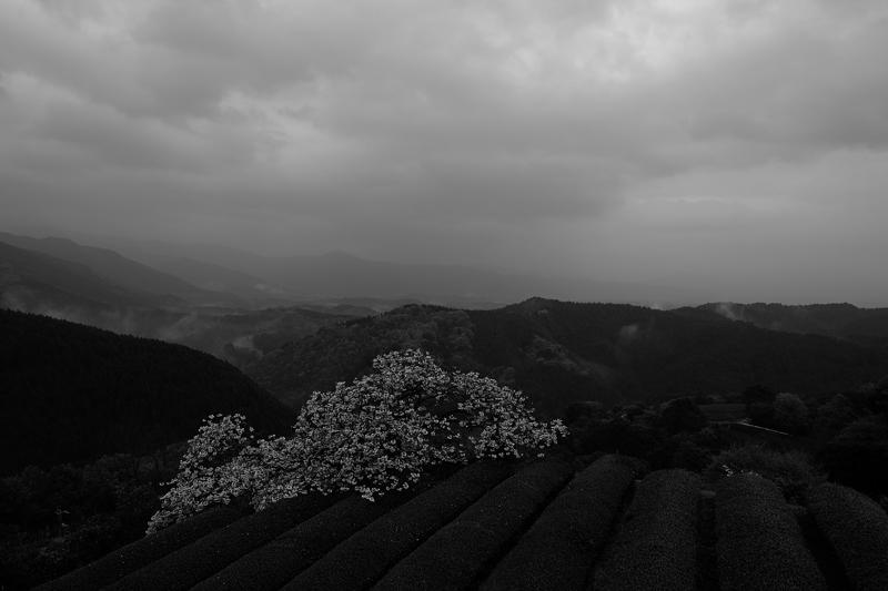 at Asagiri Kumamoto(遠山桜)