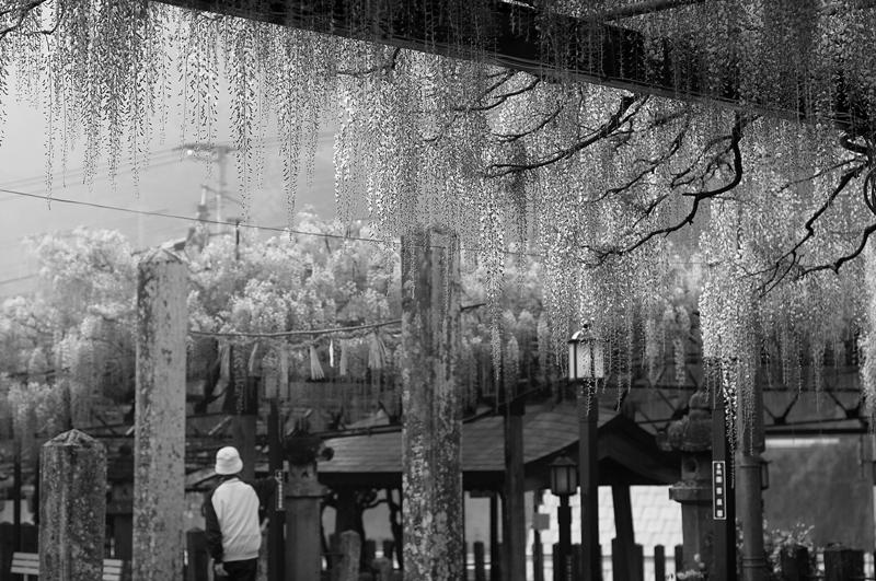 at Kurogi Fukuoka