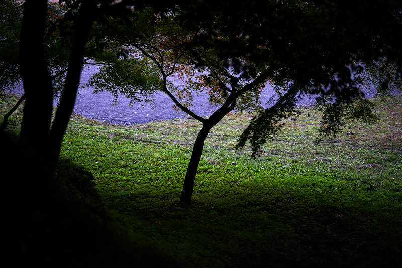 at Asakura Fukuoka(秋月)