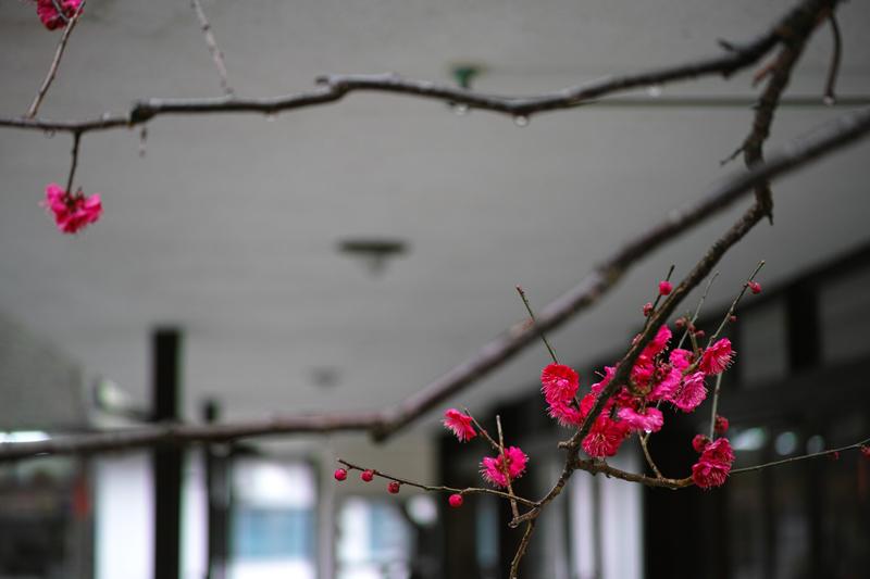 at Dazaifu Fukuoka(天満宮)