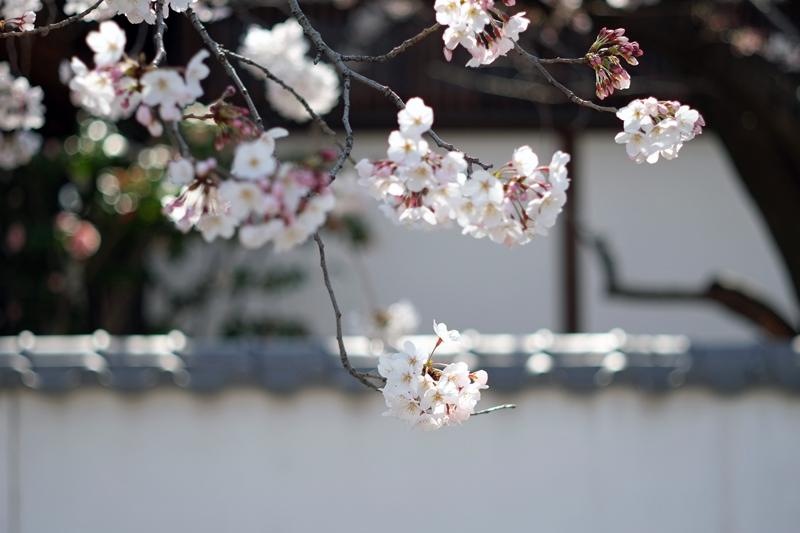 at Hakata Fukuoka(御供所町;節信院)