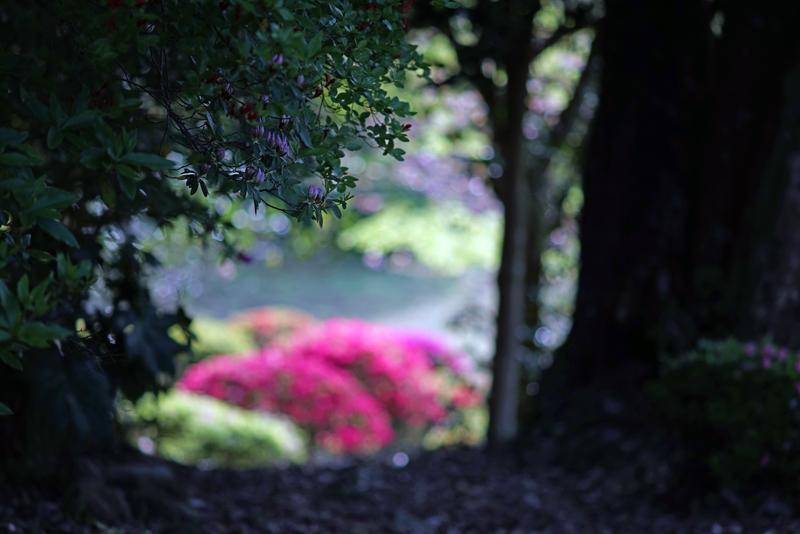 at Takae Saga(御船山楽園)