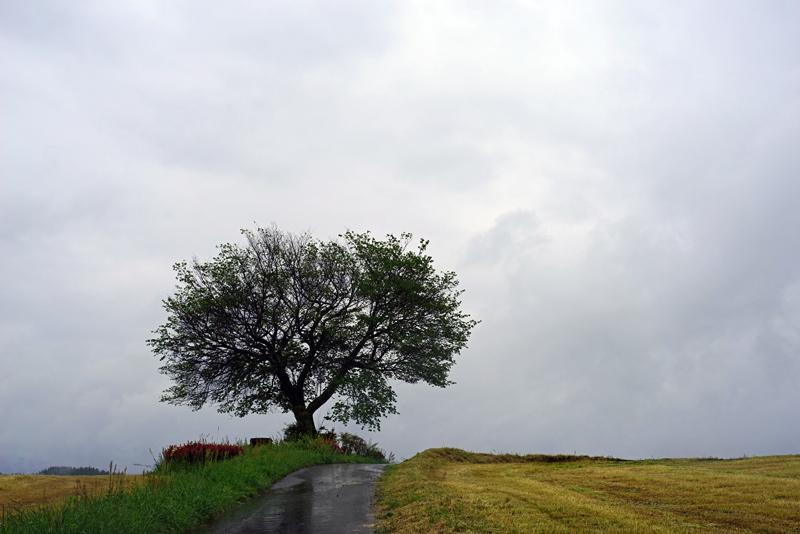 at Oguni Kumamoto
